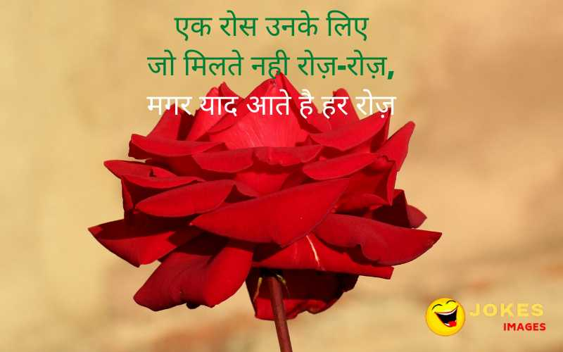 rose day greetings in hindi